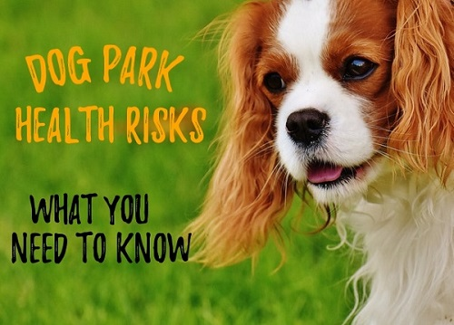 dog park health risks
